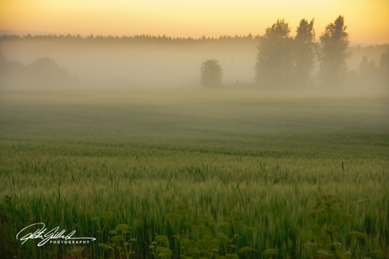 sunset and mist-04422