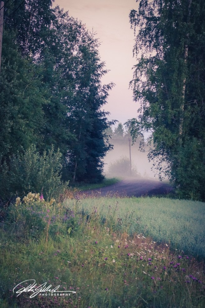sunset and mist-04471