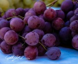 grapes (2 of 2) – kopio