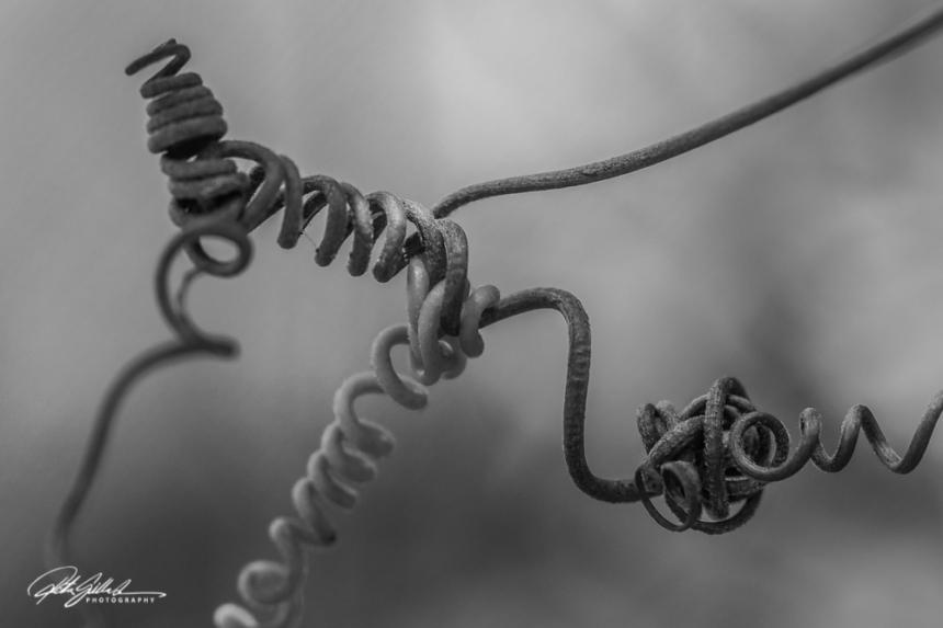 Knots-3