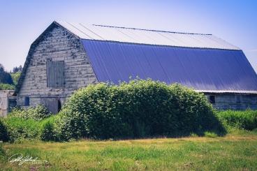 abandoned house-