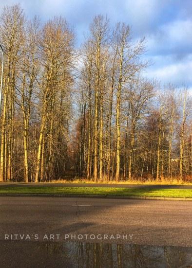 trees nov