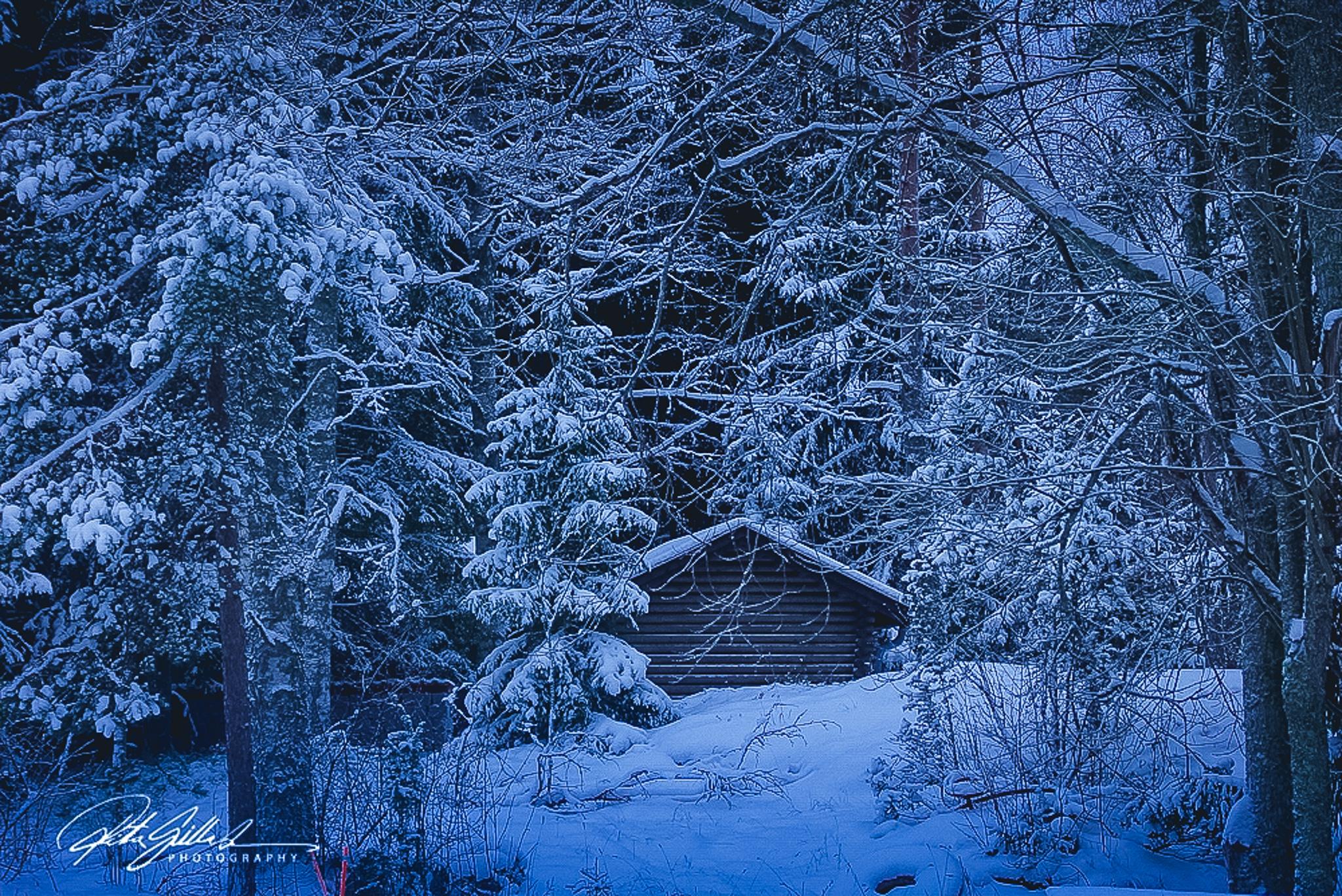 cold winter.jpg