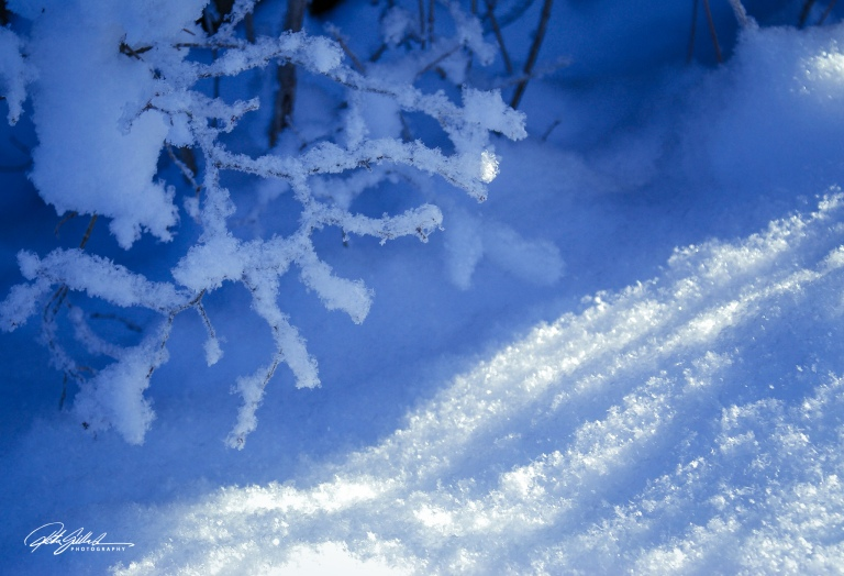 sunny winter day (11 of 14).jpg