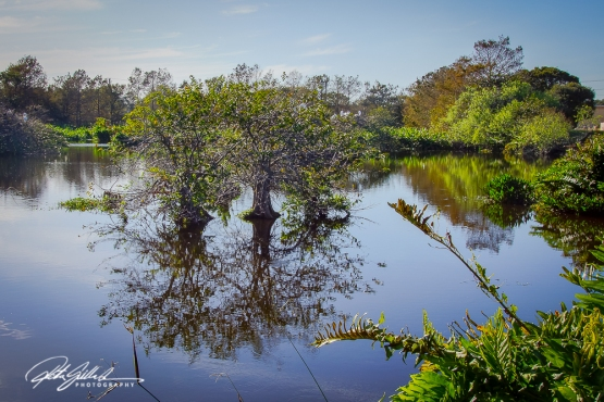 Wakodahatchee Wetland (100 of 154)