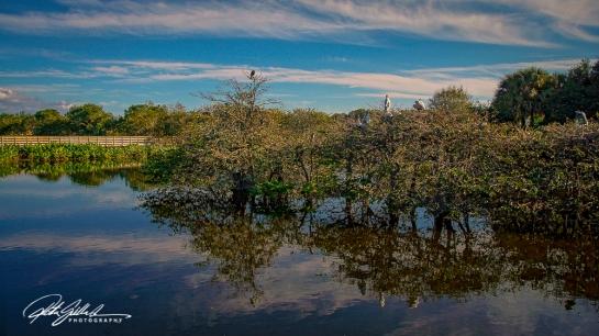 Wakodahatchee Wetland (125 of 154)