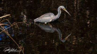 Wakodahatchee Wetland (8 of 154)
