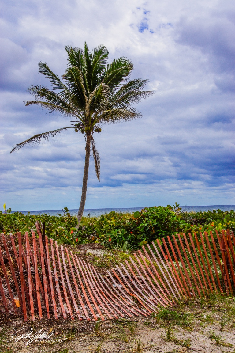 a palm tree (1 of 3)