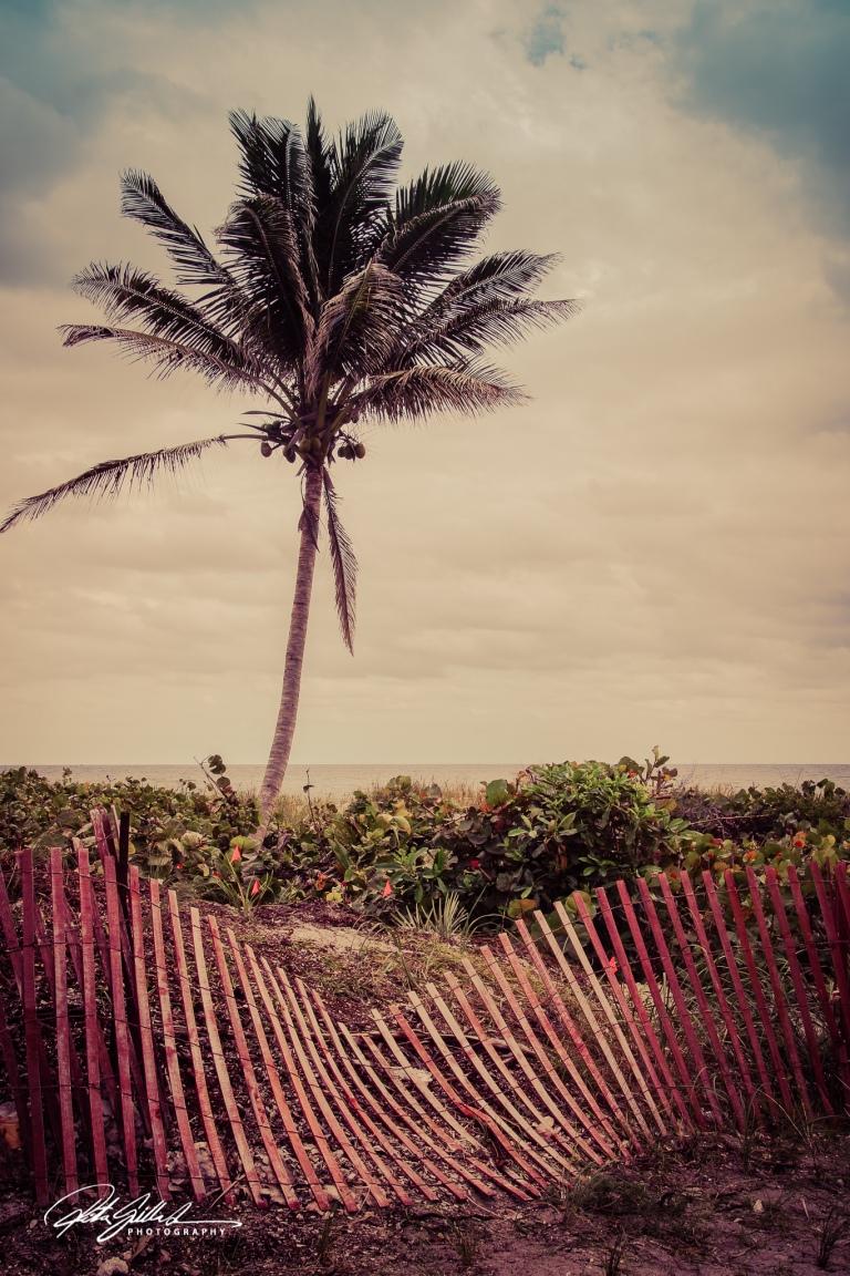 a palm tree (2 of 3)