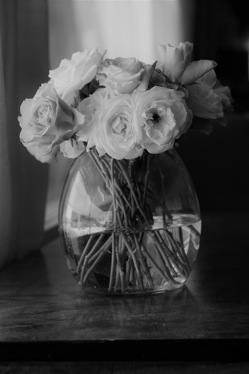 Roses  (16).jpg