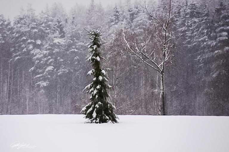 winter (3 of 6)