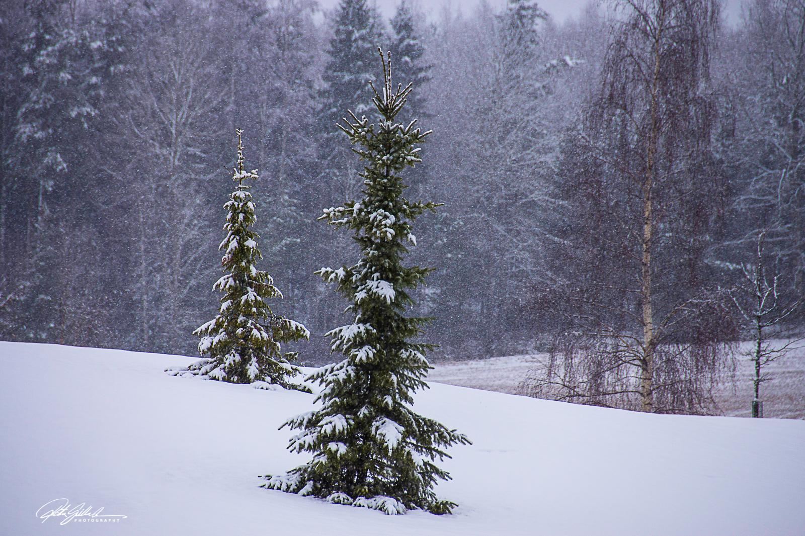 winter (4 of 6)