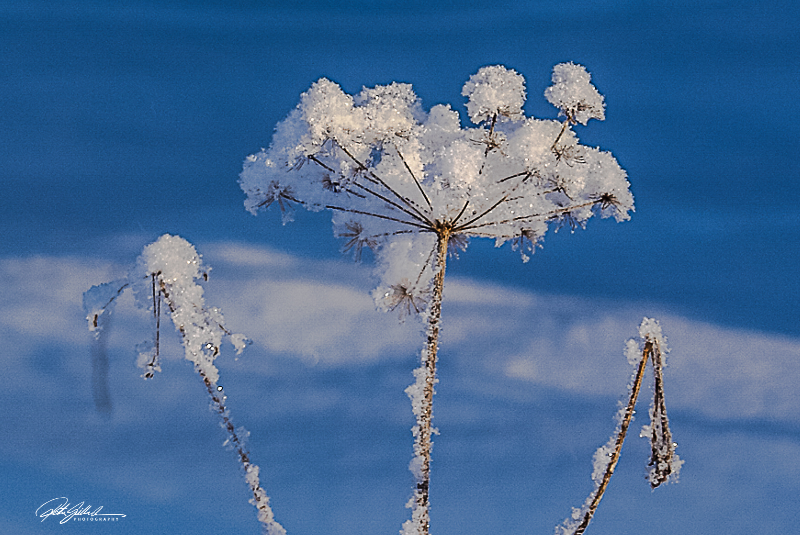 winter (5 of 6)