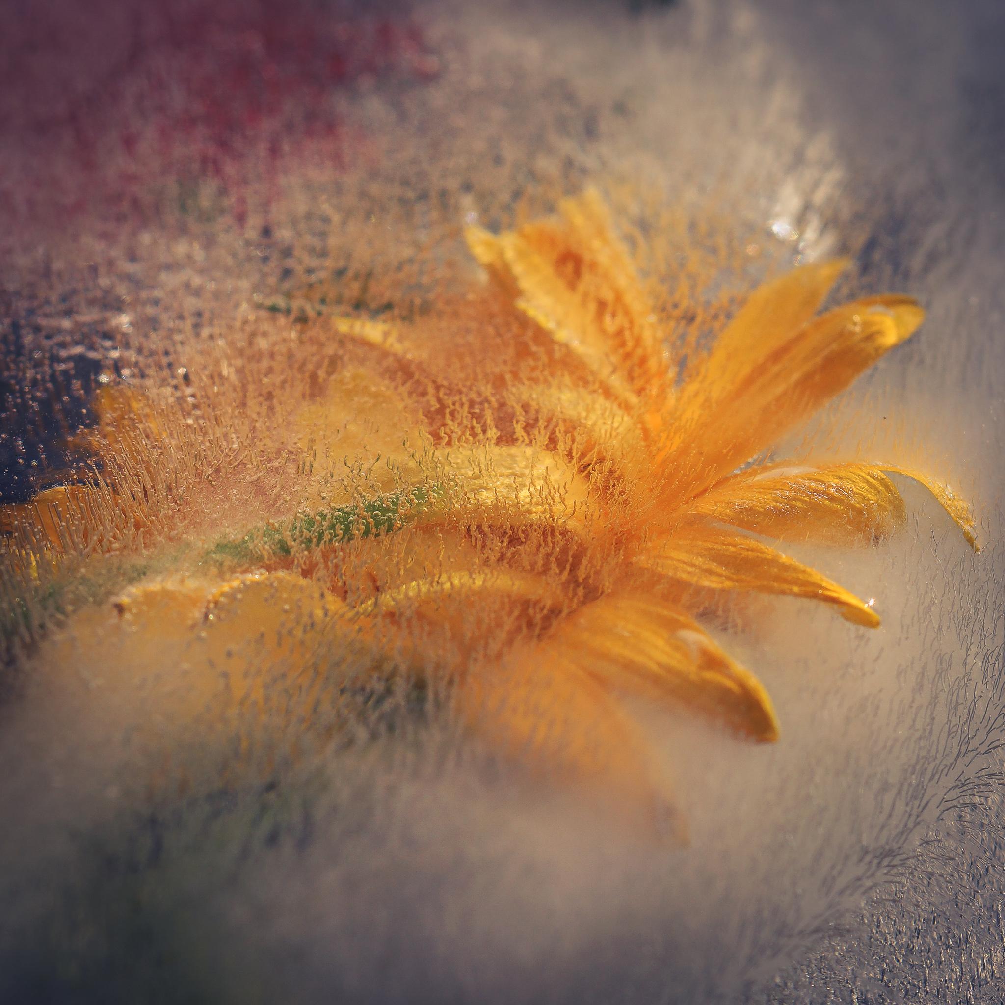 Frozen flowers (19)