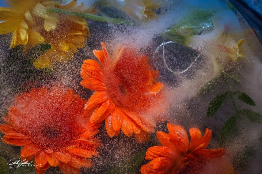 Frozen flowers (38 of 89)