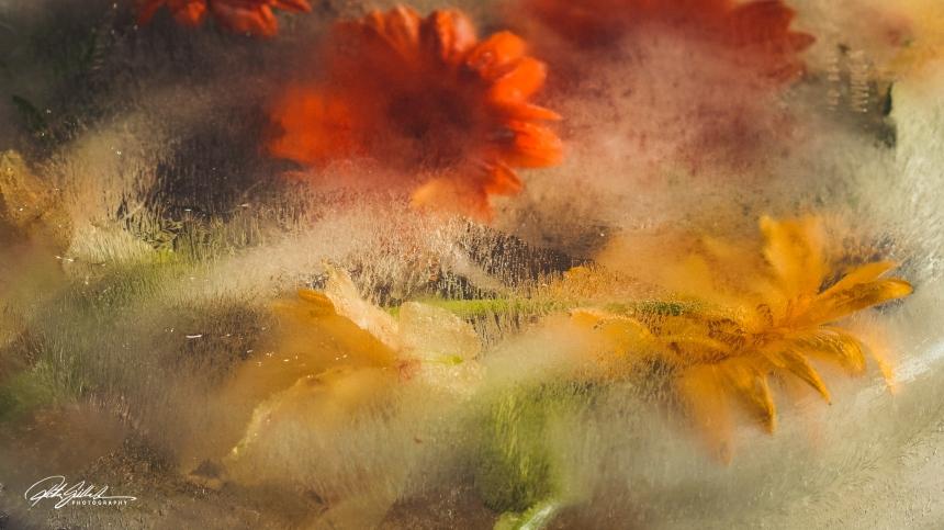 Frozen flowers edit (1 of 1)-6