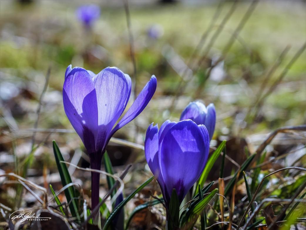 Spring macros (3 of 15)