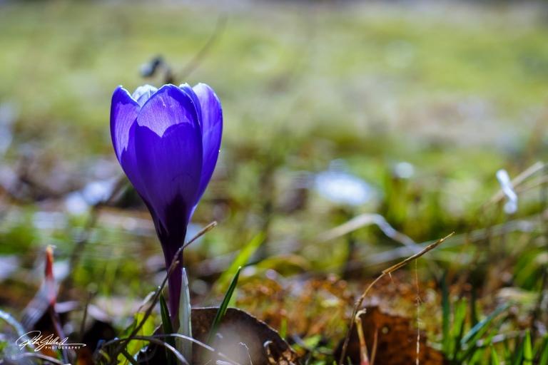 Spring macros (5 of 15)