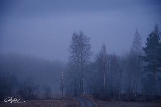 Misty evening (69 of 88)