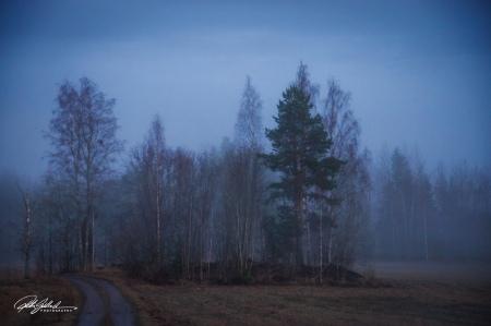 Misty evening (75 of 88)