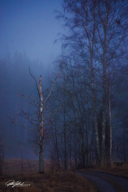 Misty evening (77 of 88)