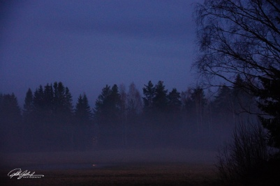 Misty evening (86 of 88)