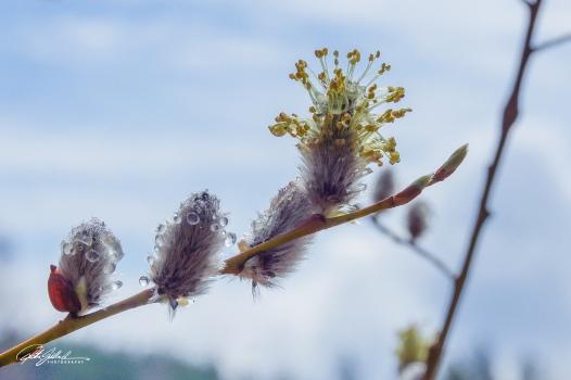 Spring macros (15 of 16)