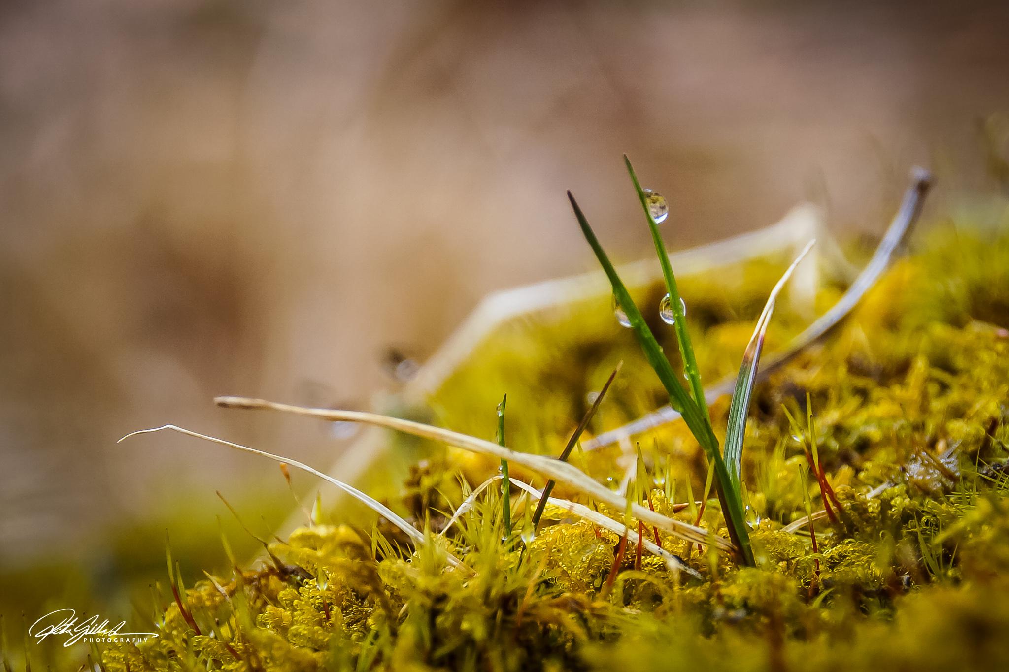 Spring macros (4 of 16)