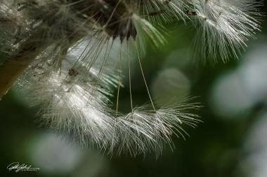 wild flowers (13 of 33)