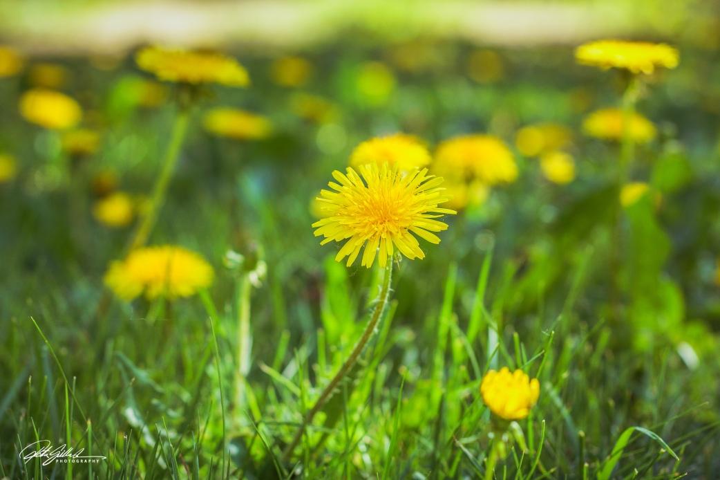 wild flowers1 (1 of 7)