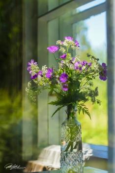 Summer flowers (46 of 118)