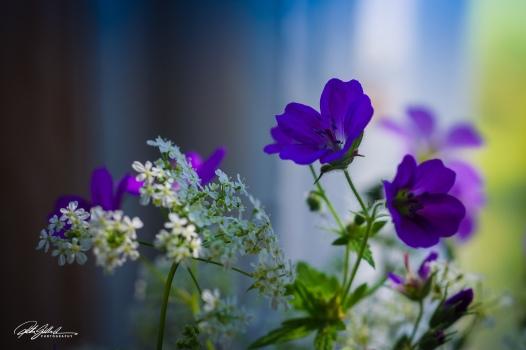 Summer flowers (9 of 118)-2