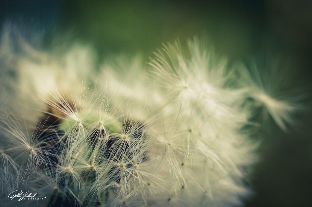 Summer flowers (91 of 118)-2