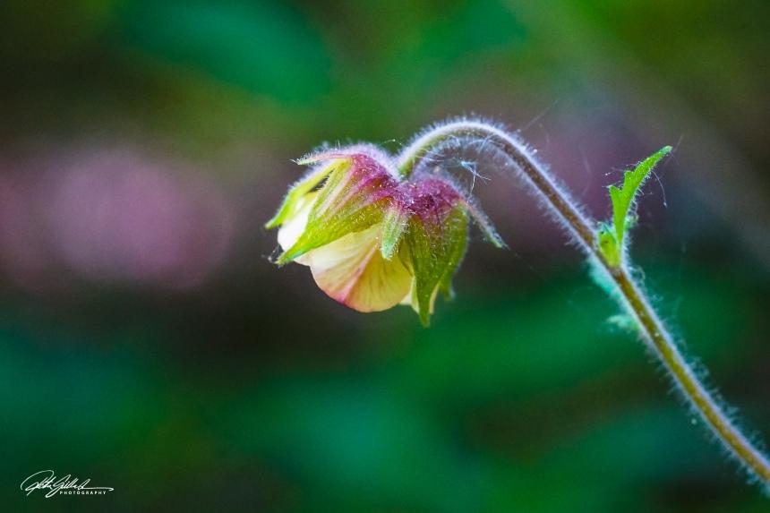wild flowers (27 of 33)