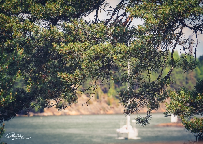 Behind the pine tree