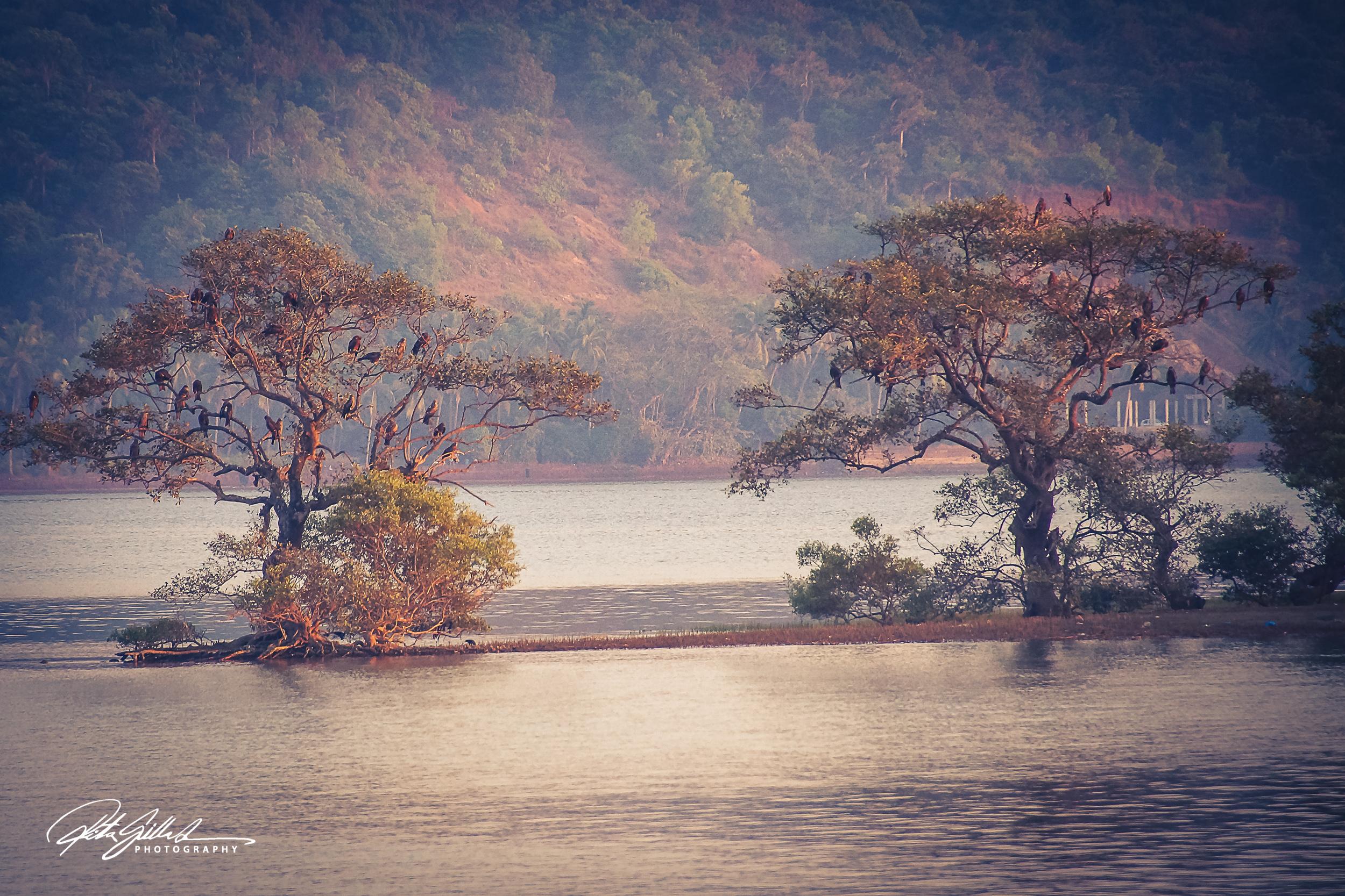 Chapora river  (15 of 39).jpg