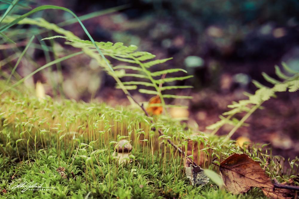 plants in fall-05307