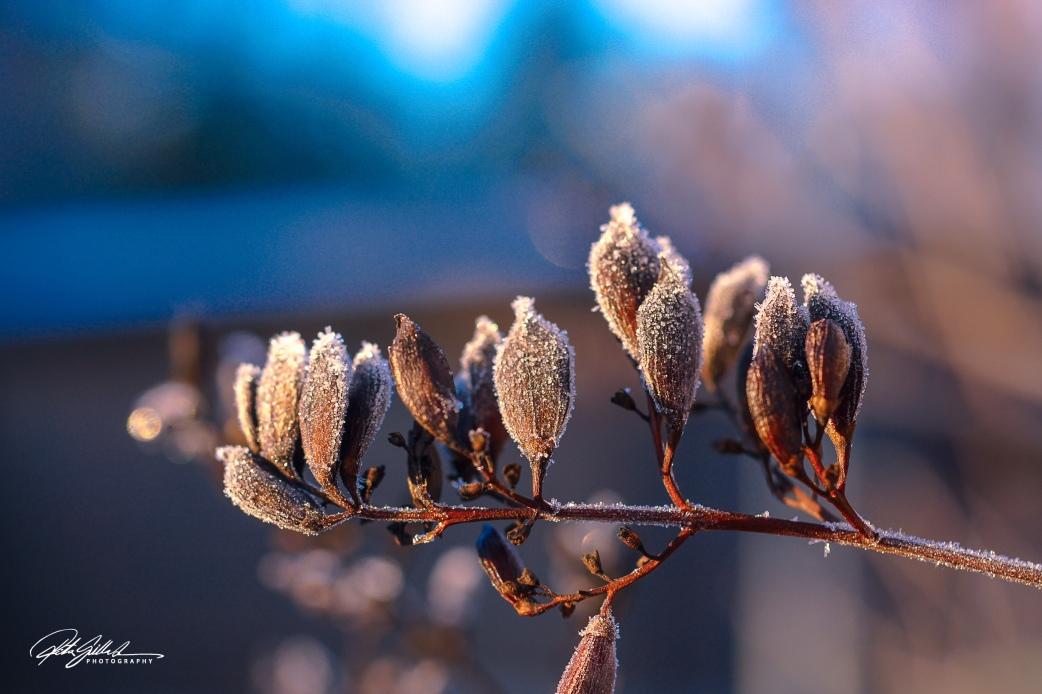 frost (1 of 6).jpg