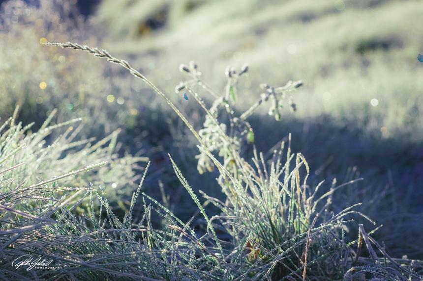frost (5 of 6).jpg