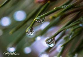 November after the rain-10