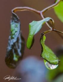 November after the rain-4