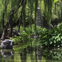 Sydney~9 ~Chinese Garden