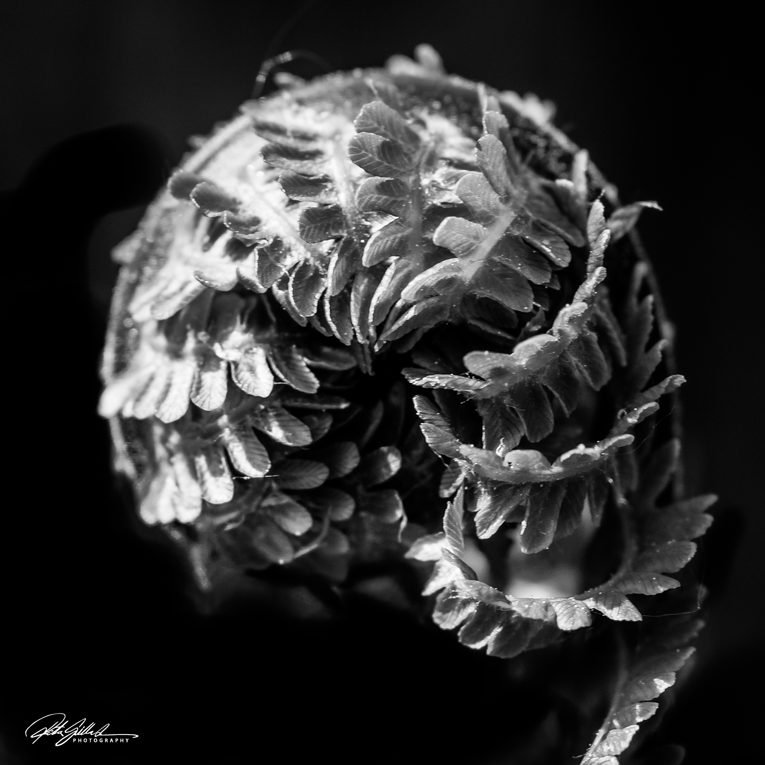 Fern II ~ Color or BW ?