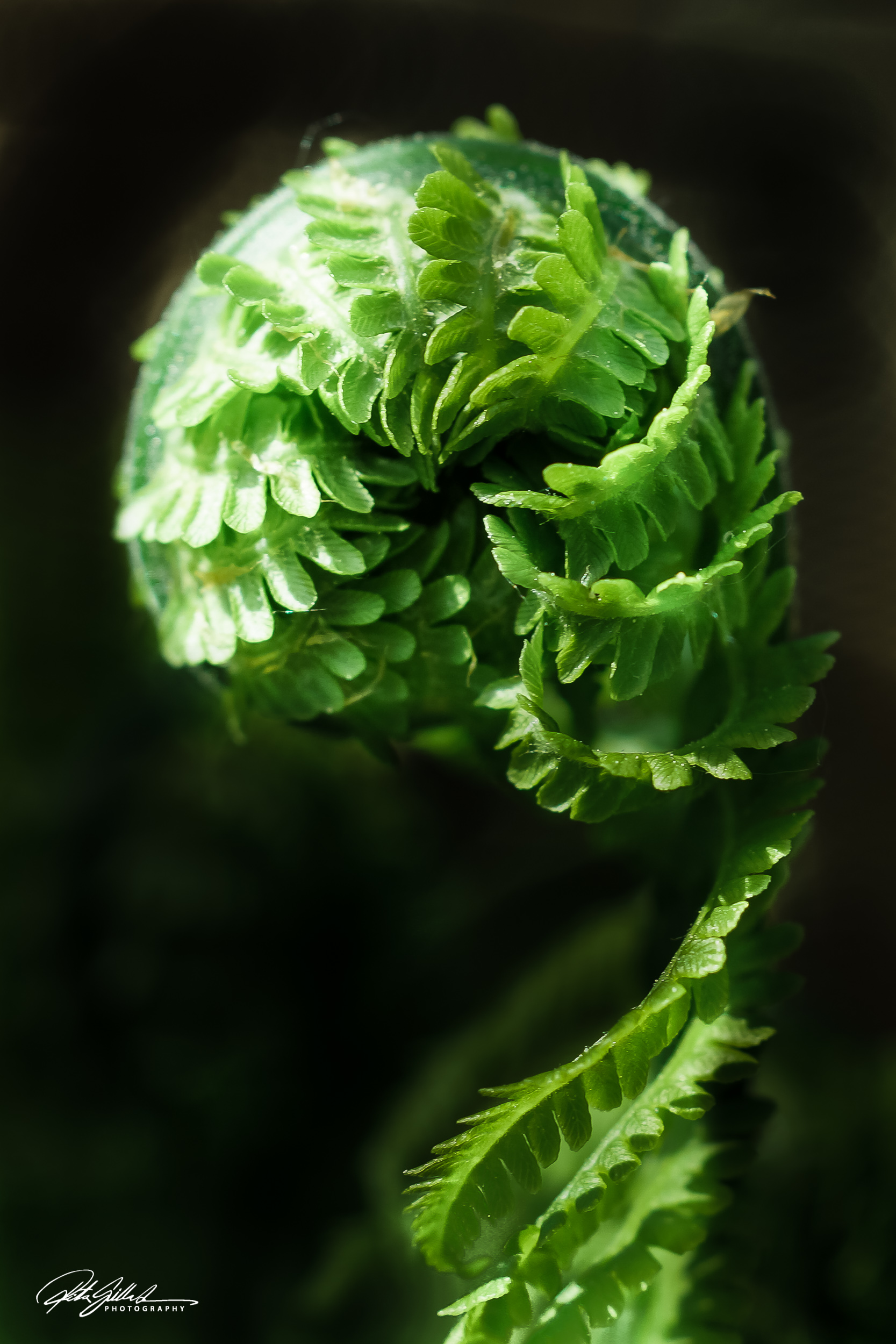 Fern ~ BW or color?