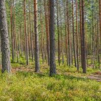 CFFC - Trees