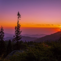 Sequoia - Sunset
